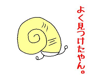 アナンムシオイガイ~徳島限定!...